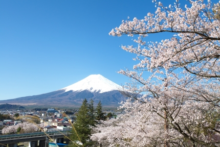 winter scenery: Mountain Fuji in spring ,Cherry blossom Sakura  Stock Photo