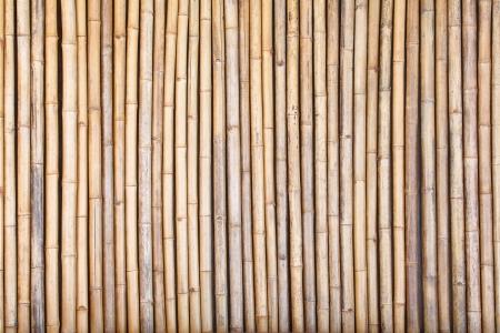 bamboo fence Stock Photo - 19870814