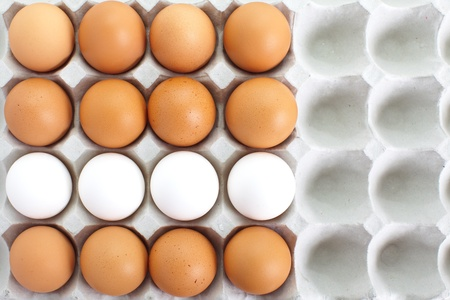 fresh eggs in pater tray  photo
