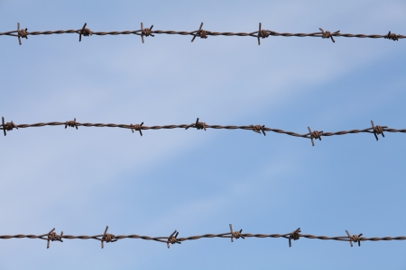 Strands of barb wire photo