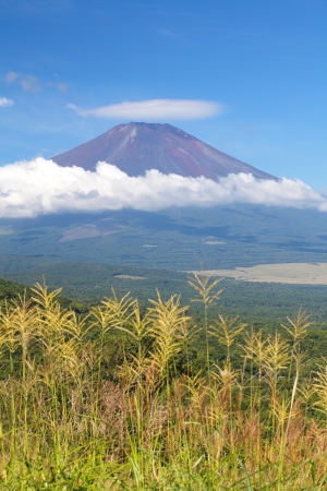 Mt Fuji in summer season  免版税图像