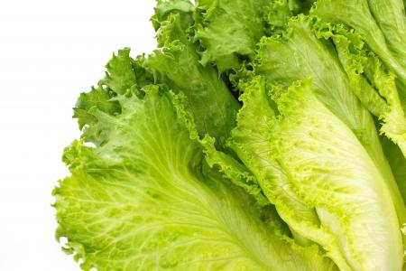 Fresh Lettuce isolated on white background   close-up  Stock Photo