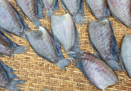gourami: Drying gourami fishes  Trichogaster pectoralis    Stock Photo