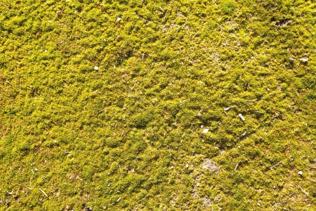 Green Moss Seamless Tileable Texture photo
