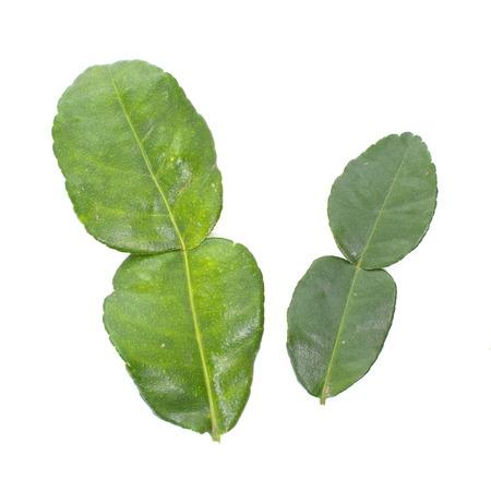 kaffir: Kaffir lime leaves