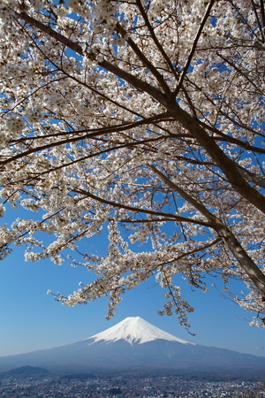 Mountain fuji and cherry blossom sakura from yamanashi prefecture , japan photo