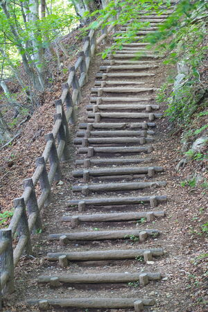 Pathway wooden stairs in summer green mountain forest photo