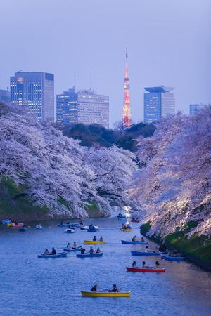 Beautiful sakura cherry blossom light up and Tokyo Tower landmark at Chidorigafuchi Tokyo photo