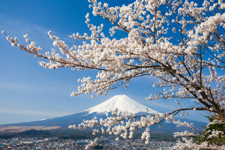 mountains and sky: Mountain Fuji and cherry blossom sakura in spring season