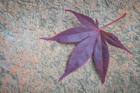 red maple leaf: Red maple leaf on stone floor background