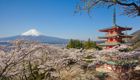 flor de sakura: Japón hermoso paisaje de la montaña Fuji y Chureito pagoda roja con sakura flor de cerezo