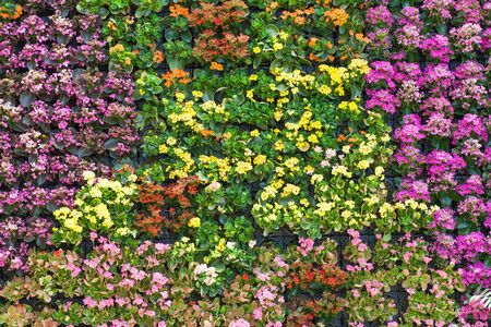 wall background: Close - up Beautiful flower wall background