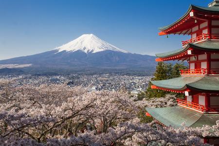 cereza: Japón hermoso paisaje de la montaña Fuji y Chureito pagoda roja con sakura flor de cerezo