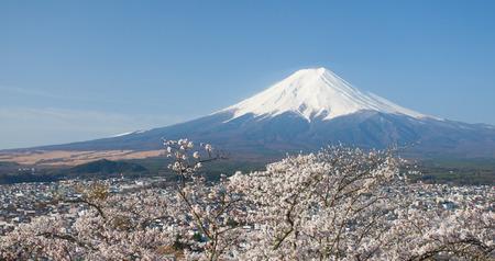 flor de cerezo: Monta�a Fuji y Sakura de la flor de cerezo en primavera Foto de archivo