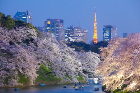 blossom tree: Beautiful sakura cherry blossom light up and Tokyo Tower landmark at Chidorigafuchi Tokyo