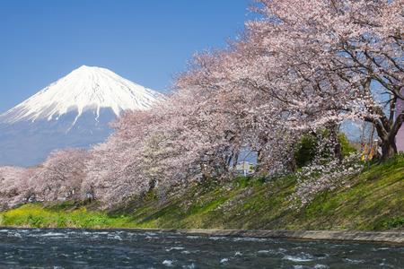 flor cerezo: Hermosa Monta�a Fuji y sakura flor de cerezo en la temporada de primavera de Jap�n Foto de archivo