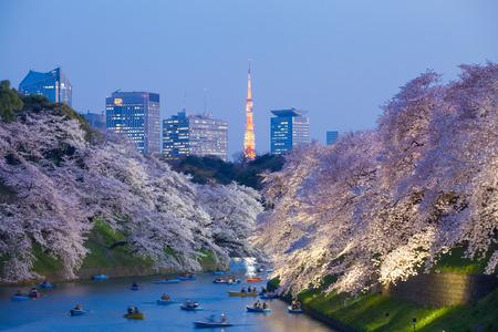 Schöne Kirschblüte Kirschblüte leuchten und Tokyo Tower Wahrzeichen bei Chidorigafuchi Tokyo Standard-Bild - 49880296