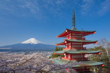 chureito: Japan beautiful landscape Mountain Fuji and Chureito red pagoda with cherry blossom sakura