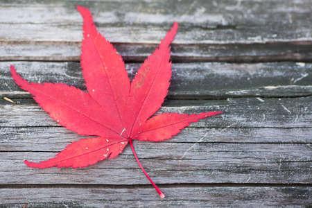 red maple leaf: Red maple leaf fall on wood floor in autumn season