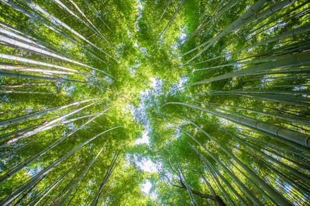 Beautiful bamboo forest at Arashiyama touristy district , kyoto 스톡 콘텐츠