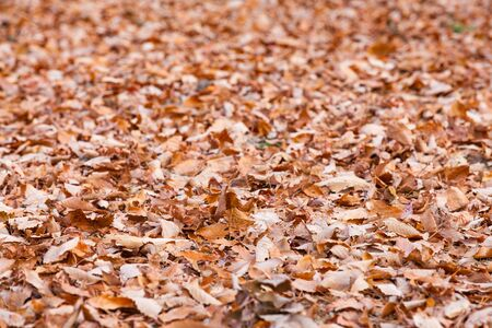 autumn leaves falling: Autumn leaves falling on floor at forest