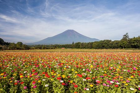 Gebied van kosmosbloemen en Berg Fuji in zomerseizoen in Yamanakako Hanano Miyako Koen