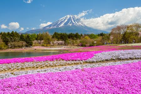 Montagne Fuji et le champ de mousse rose dans la saison de printemps