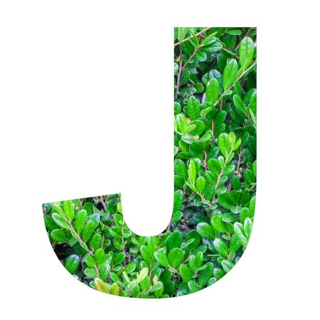 english letters: English alphabet letters with green leaf photo isolated on white background