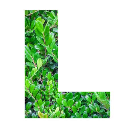 old english letters: English alphabet letters with green leaf photo isolated on white background