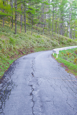 pinetree: Mountain road and pine forest in spring