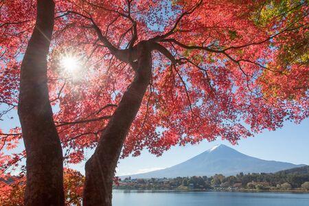 가을의 가와구치 코 호수에서 붉은 단풍 나무와 후지산