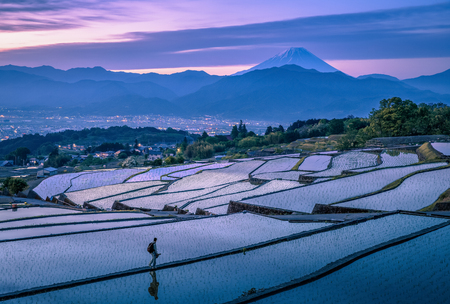prefecture: Japanese rice terrace and Mountain Fuji in early morning at Kofu city , Yamanashi prefecture