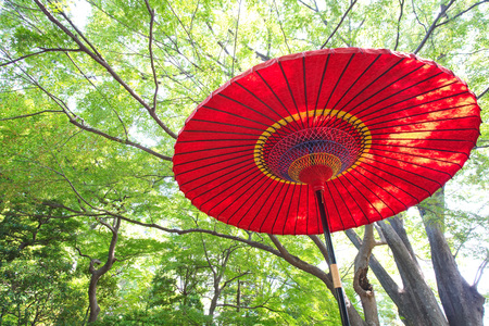paper umbrella: Japanese red paper umbrella with green tree at Japanese garden in summer season Stock Photo