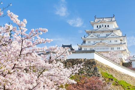 일본 히메지 성, 아름다운 사쿠라 벚꽃 시즌에 화이트 헤론 성 스톡 콘텐츠