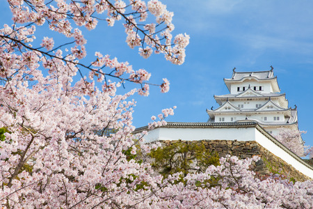 Japan Himeji castle , White Heron Castle in beautiful sakura cherry blossom season