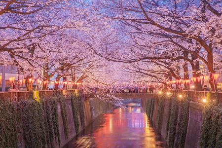 Tokio sakura kersenbloesem met licht op Nakameguro, Tokio Stockfoto - 84148119