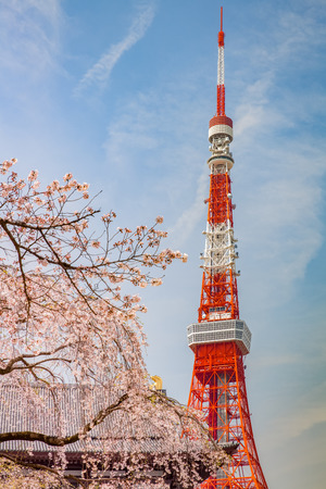 Tokyo tower and Sakura cherry blossom in Japan spring season