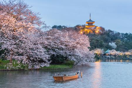 Il giardino Yokohama Sankeien, un giardino tradizionale e tipico in stile giapponese in fiore Sakura con illuminazione Archivio Fotografico - 92815424