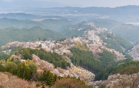 Yoshinoyama sakura cherry blossom . Mount Yoshino  in Nara Prefecture, Japans most famous cherry blossom viewing spot