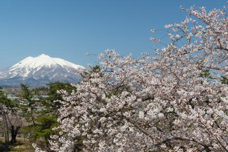 Mt.Iwaki and Sakura cherry blossom in spring.Mount Iwaki is a compound volcano located in the southwest portion of the Tsugaru Plain.