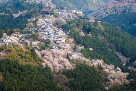 Yoshinoyama sakura cherry blossom . Mount Yoshino  in Nara Prefecture, Japan's most famous cherry blossom viewing spot