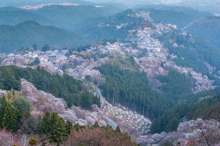 Yoshinoyama sakura cherry blossom . Mount Yoshino  in Nara Prefecture, Japan's most famous cherry blossom viewing spot Stok Fotoğraf - 103215698