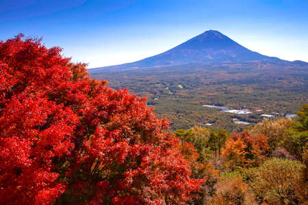 The view of Mount Fuji with large maple trees is turning red. Stok Fotoğraf