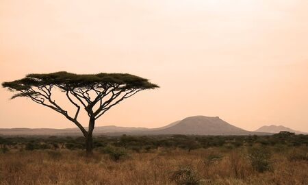 Serengeti sunset with tree silhouette