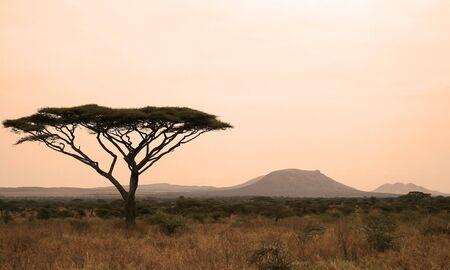 Serengeti Sonnenuntergang mit Baum silhouette