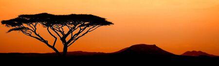 Sunset in Serengeti Stock Photo - 5854980