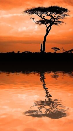 Image of sunset in the African savannah with reflection in water photo