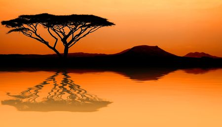acacia tree: Image of sunset in the African savannah with reflection in water Stock Photo