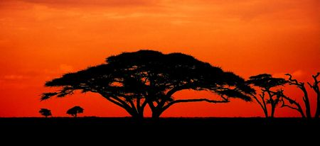 African sunset with acacia tree Stock Photo - 6697309