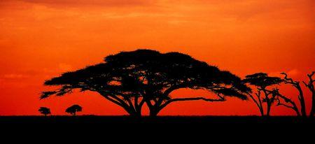 africa sunset: Tramonto africano con albero di acacia  Archivio Fotografico